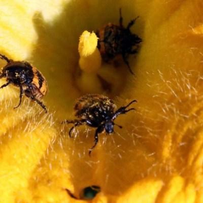 Insectos, en peligro por pérdida dramática de plantas alimenticias