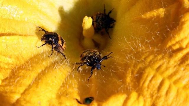 Insectos, en peligro por pérdida dramática de plantas