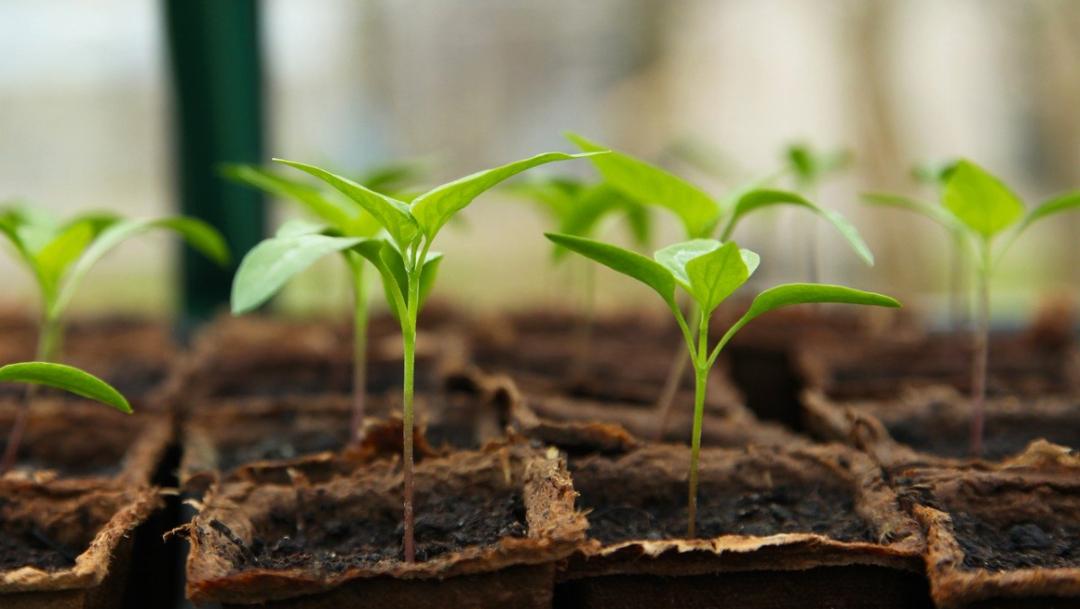 ¿Con qué verduras empezar un huerto en casa?