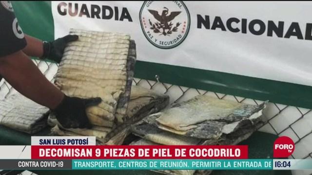 FOTO: 25 de abril 2020, interceptan nueve piezas de piel de cocodrilo en san luis potosi
