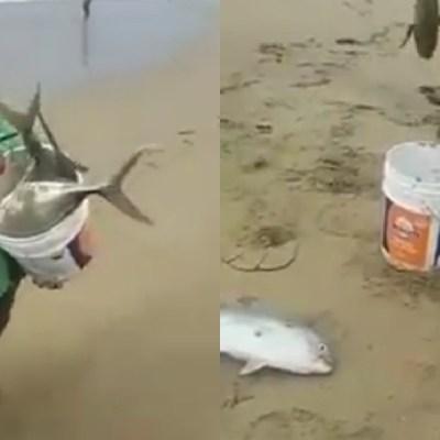 Video: Peces vivos salen del mar en playas de Acapulco