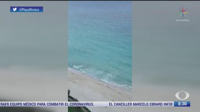 tiburones nadan en la orilla de una playa de cancun