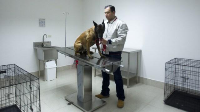 Foto: Un centro de bienestar animal fue abierto al público en una zona vulnerable al oriente de la CDMX, 16 abril 2020