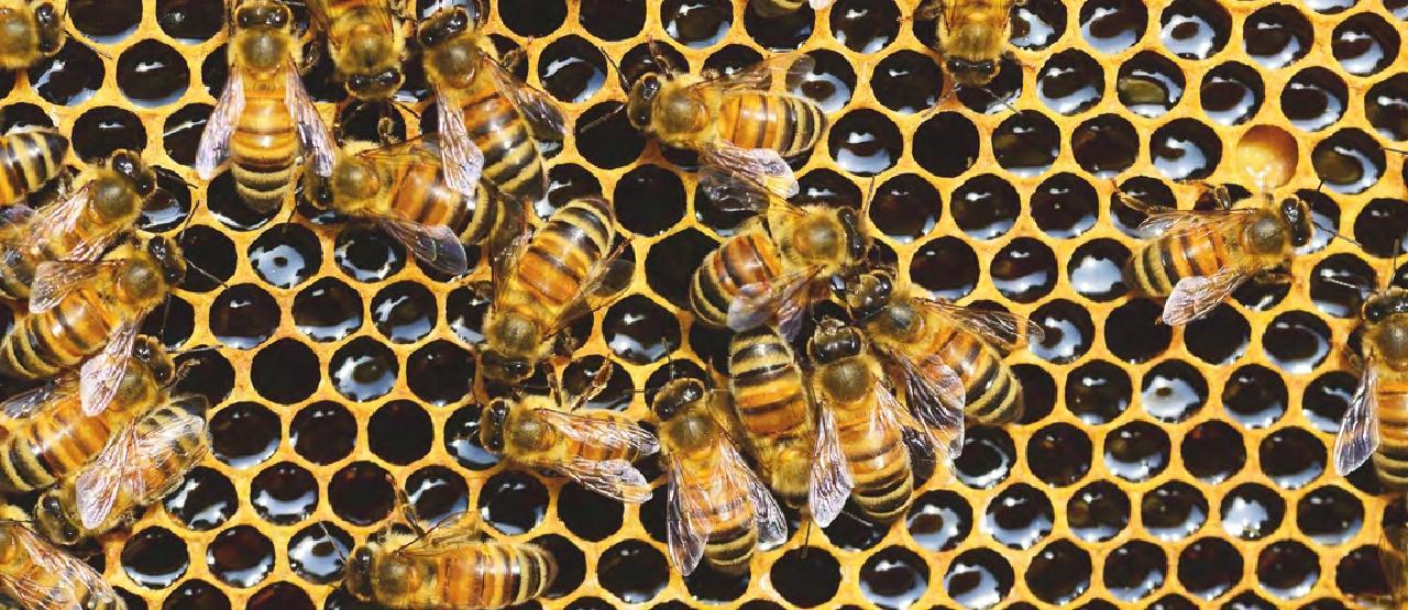 Panal de abejas. Fotografía.