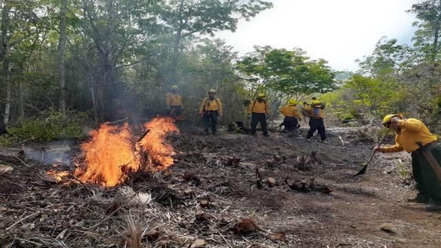 Brigadistas intentan sofocar incendios en Quintana Roo