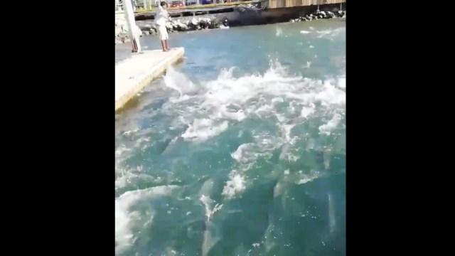 Cardumen de jurel sorprende en la marina de Cabo San Lucas