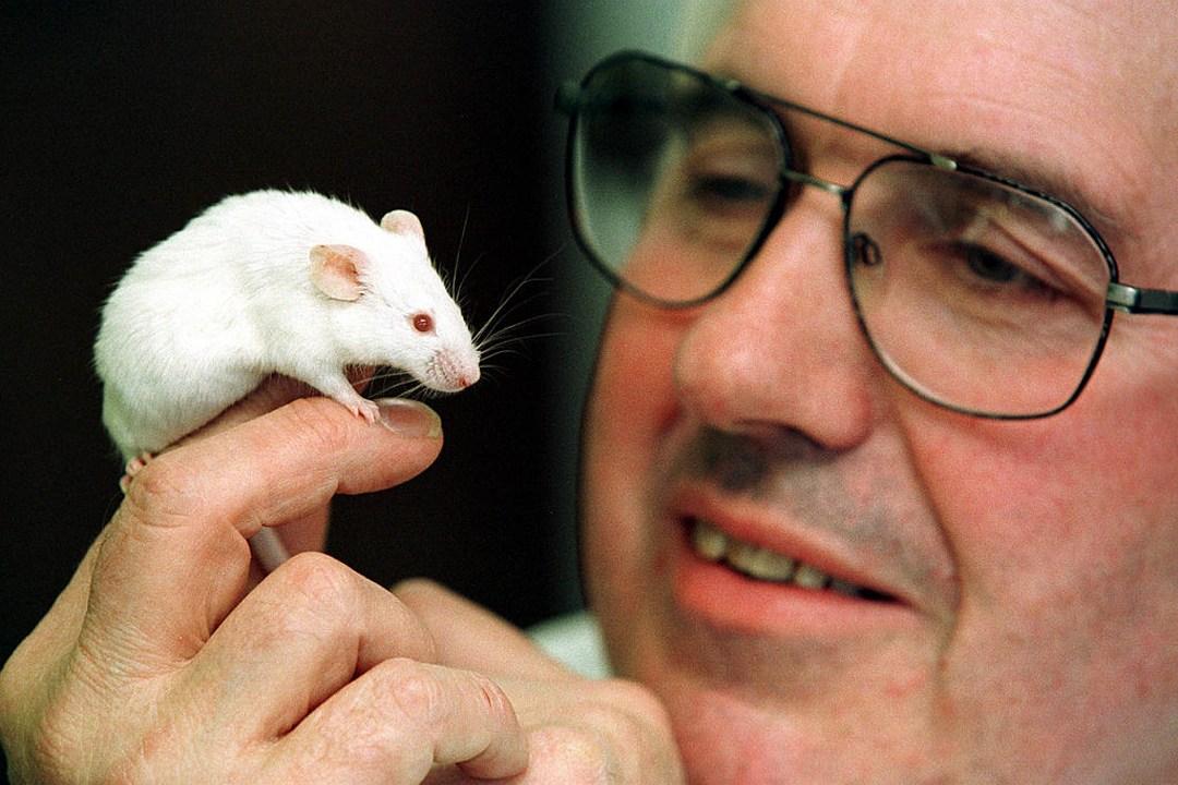 Científicos crean embrión ratón células humano foto