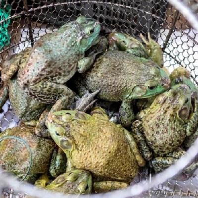 Wuhan prohíbe consumo de animales salvajes tras pandemia de coronavirus