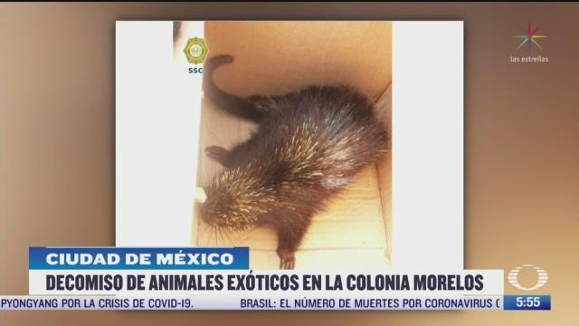 detienen a dos hombres con animales exoticos en la colonia morelos cdmx