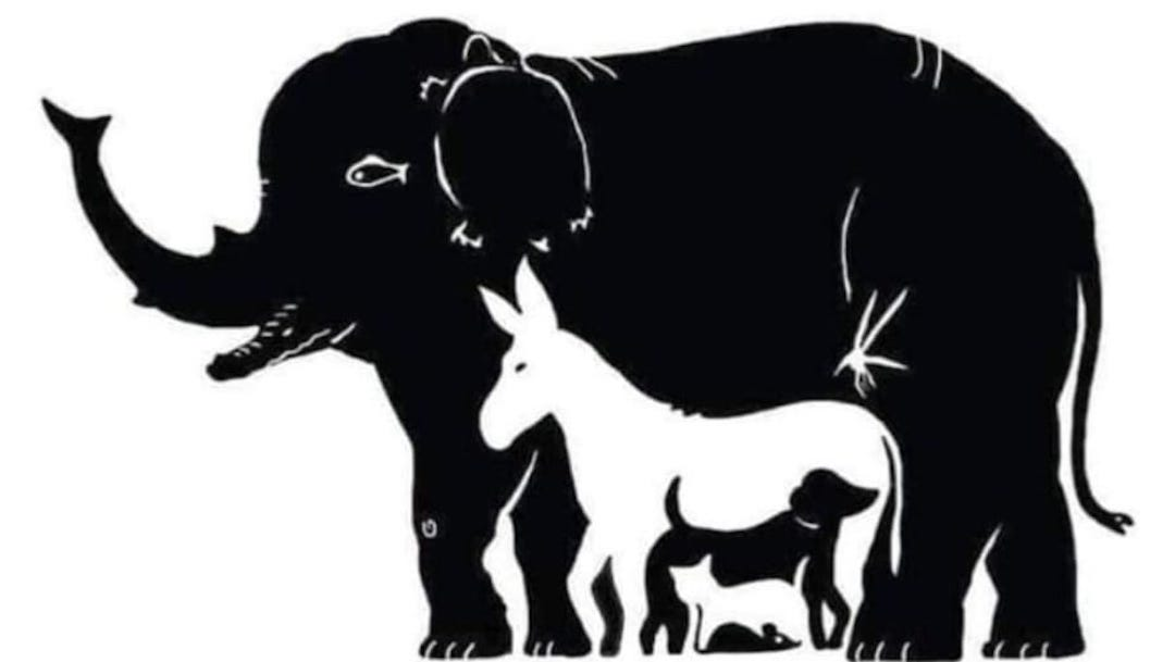 Reto visual Puedes encontrar a los 13 animales en la imagen 6 mayo 2020
