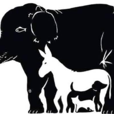 Reto visual: ¿Puedes encontrar a los 13 animales en la imagen?