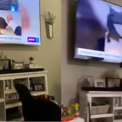 Video: Perrito conmueve por su reacción 'al verse' en la televisión