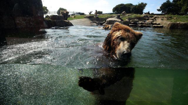 Hombre ahogar oso Polonia zoológico Mayo 2020