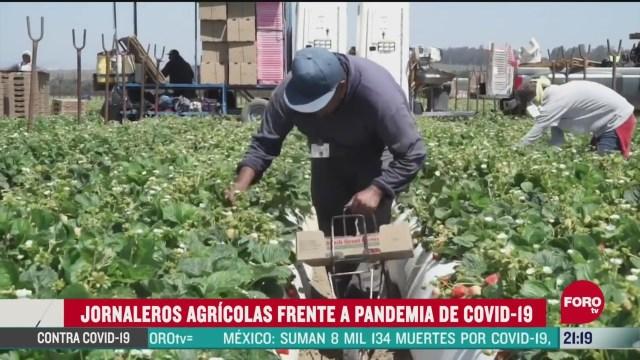 jornaleros siguen trabajando pese a pandemia
