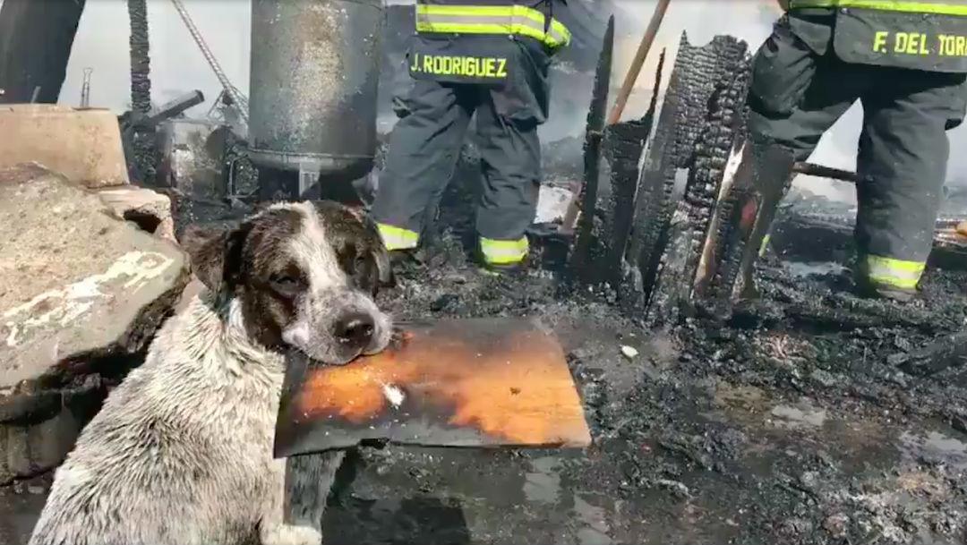Foto Video: Perrito en llora al ver su casa destruida por un incendio 15 mayo 2020