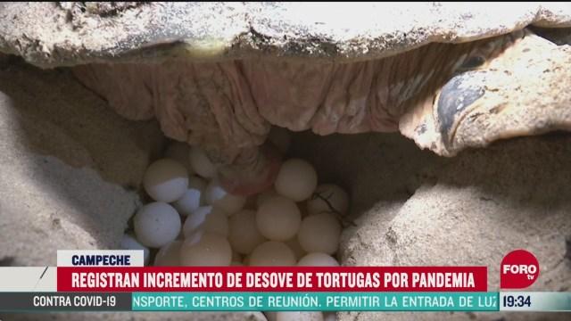 FOTO: 30 de mayo 2020, registran incremento de desove de tortugas por covid
