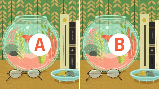 Reto visual: Encuentra las 9 diferencias entre estas dos peceras