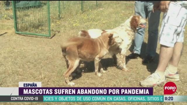 mascotas sufren abandono por pandemia