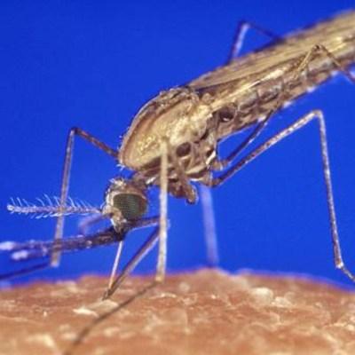 Identifican nueva cepa de Zika en Brasil capaz de causar otra epidemia