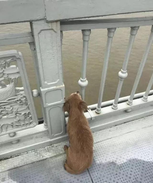 Perro espera a su dueño muerto en un puente en Wuhan