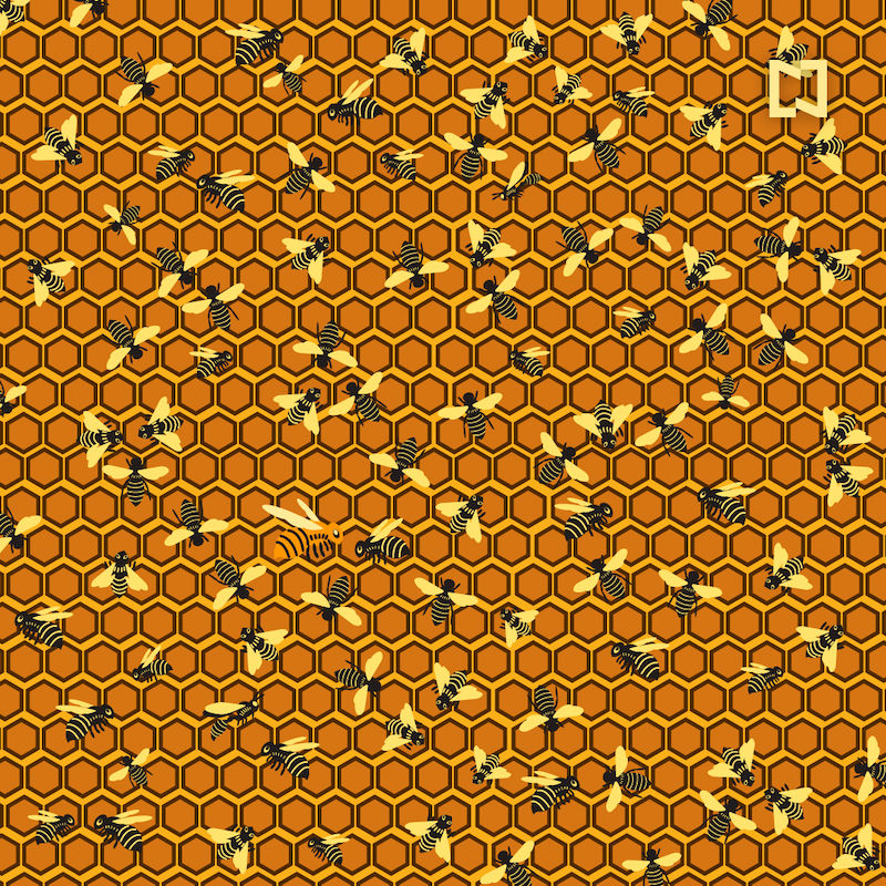 ¿Puedes encontrar dos avispones y a la abeja reina en esta imagen?