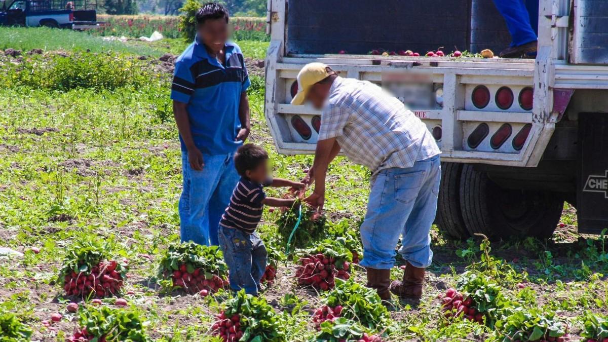 Campo mexicano lucha contra trabajo infantil por T-MEC