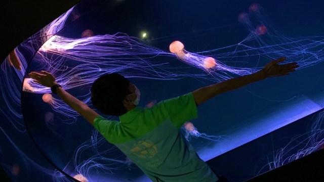 Acuario 'Sunshine' de Tokio abre el mayor tanque panorámico para rodearse de medusas