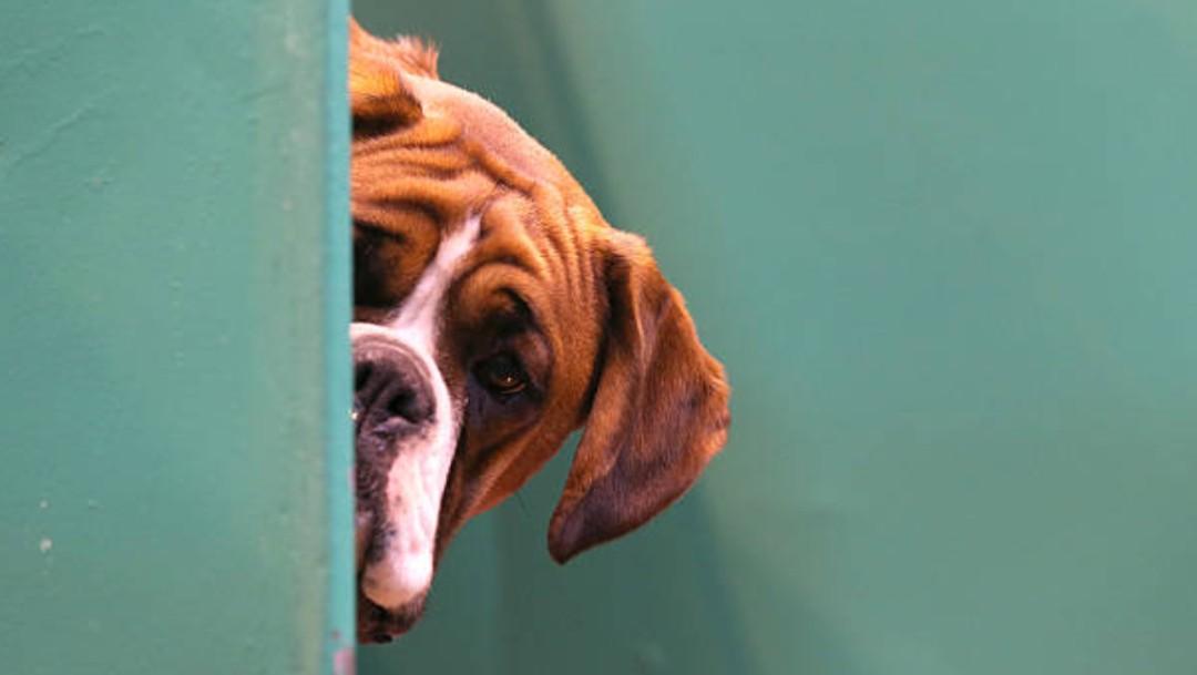 Más del 60% de las enfermedades infecciosas humanas provienen de animales: Especialistas