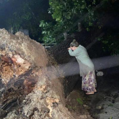 Mujer llora por árbol de 100 años que Hanna derribó en Monterrey