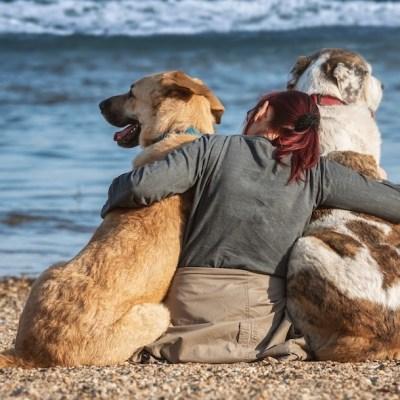 ¿Por qué se conmemora el Día Mundial del Perro el 21 de julio?
