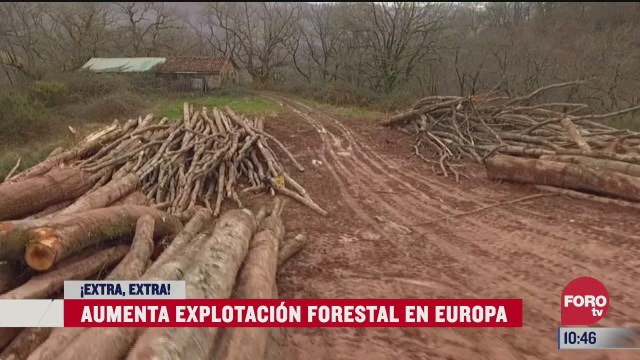 extra extra aumenta explotacion forestal en europa