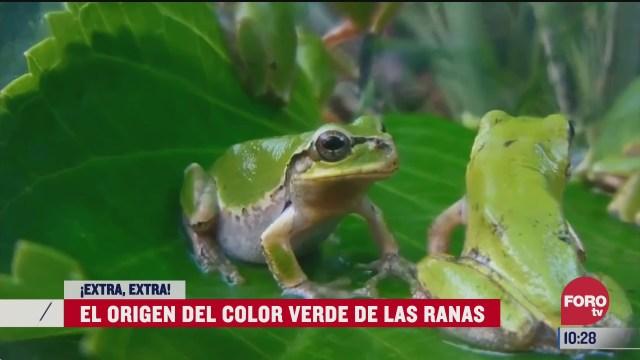 extra extra el origen del color verde de las ranas