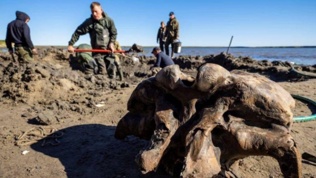 Los restos de un mamut en extraordinario estado de conservación fueron encontrados en un lago de la península de Yamal, en Rusia. Científicos calculan tendría al menos 10 mil años de antigüedad