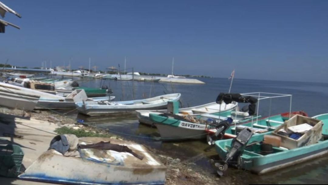 Inicia la veda del caracol en Campeche; embarcaciones paran labores