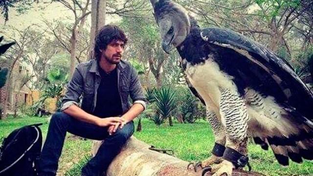 La águila arpía ha sorprendido por su tamaño. Conoce su hábitat y características