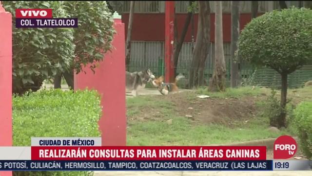 alcaldia cuauhtemoc realizara consultas sobre areas caninas en tlatelolco