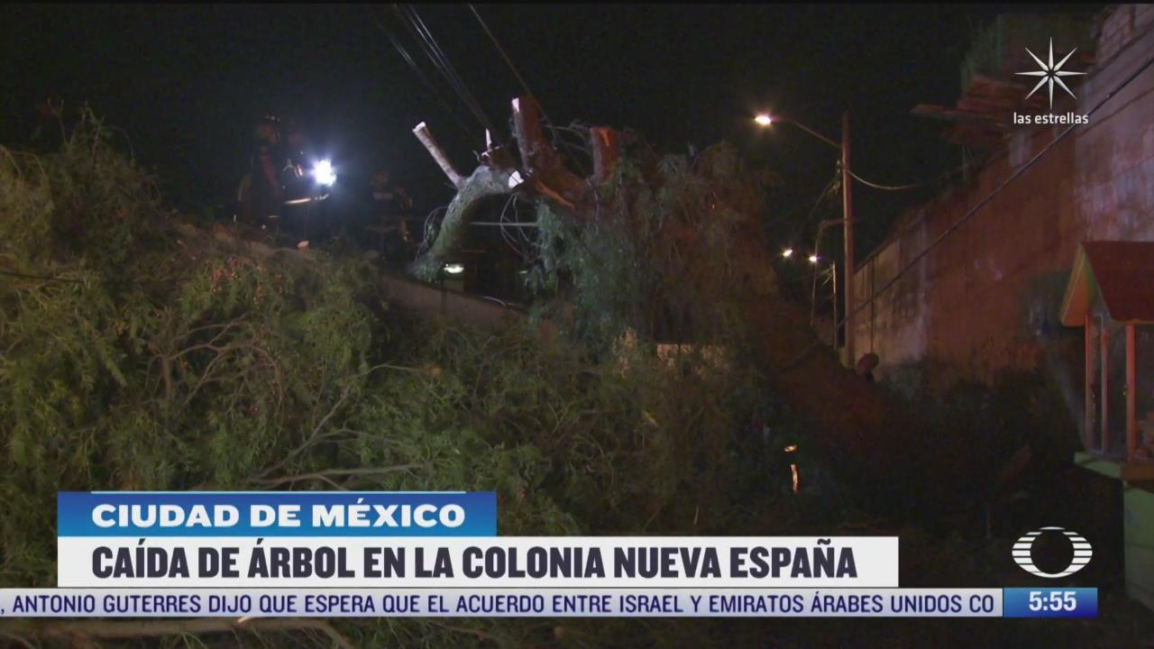 cae arbol de mas de 15 metros de altura sobre una casa en cdmx