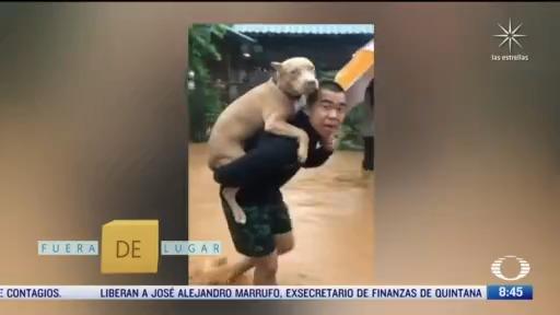fuera de lugar soldado rescata a perro de inundaciones en tailandia