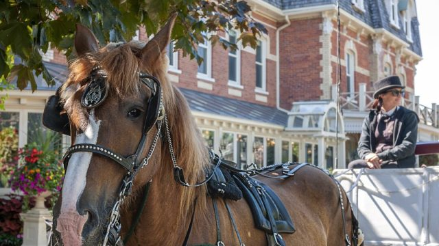 Muere caballo que jalaba carruaje turístico en Italia