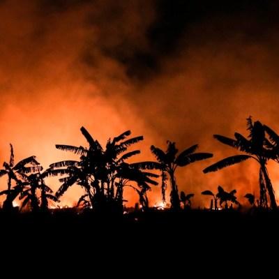 Incendios forestales de 2020 podrían ser peores que en 2019, advierte WWF