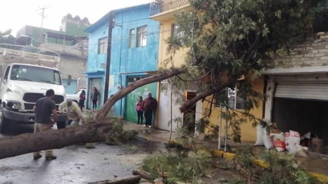 Lluvia y vientos dejan afectaciones en CDMX, entre ellas árboles caídos.