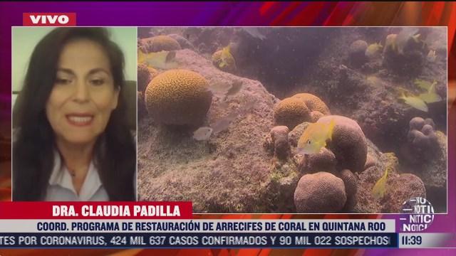 FOTO: 1 de agosto 2020, la reproduccion de corales en cautiverio