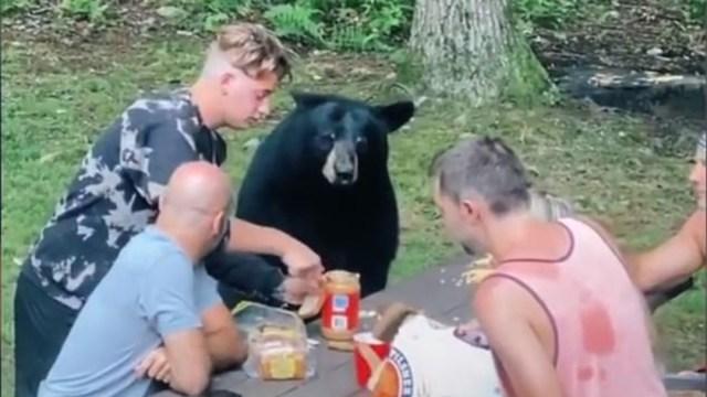 Oso negro, Maryland, excursionistas, captura de pantalla
