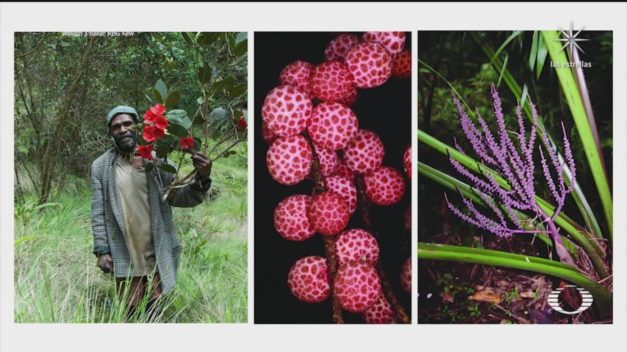presentan catalogo de todas las plantas de nueva guinea