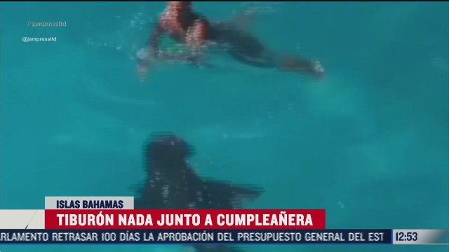 tiburon sorprende a cumpleanera en las islas bahamas