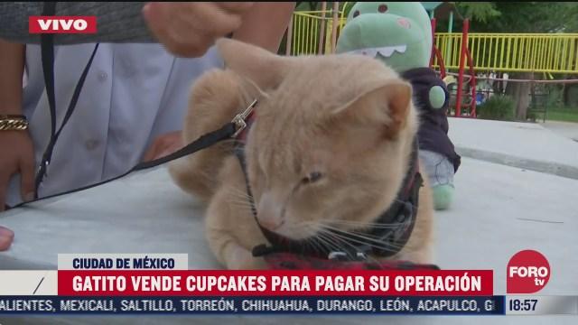 antonio el gatito que vende cupcakes para pagar su operacion