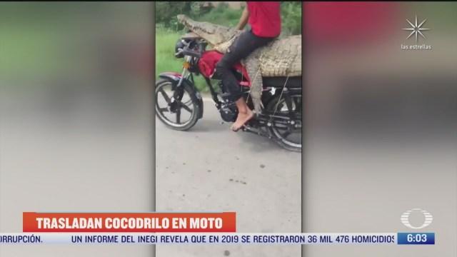 atrapan cocodrilo gigante y se lo llevan en moto