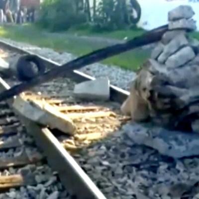 Reportan pérdidas millonarias por bloqueos de la CNTE y normalistas a vías de tren en Michoacán