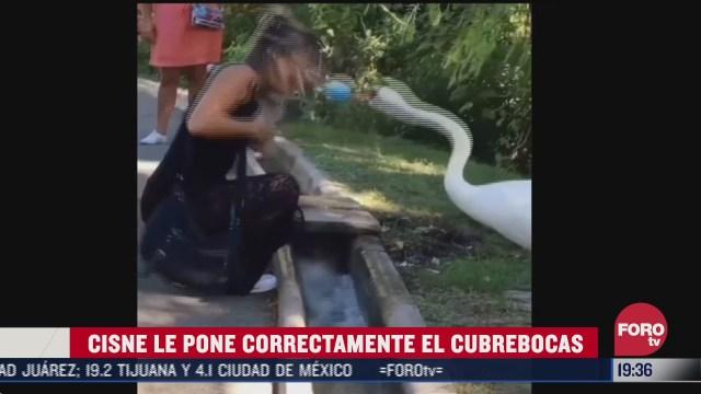 cisne pone el cubrebocas a una mujer