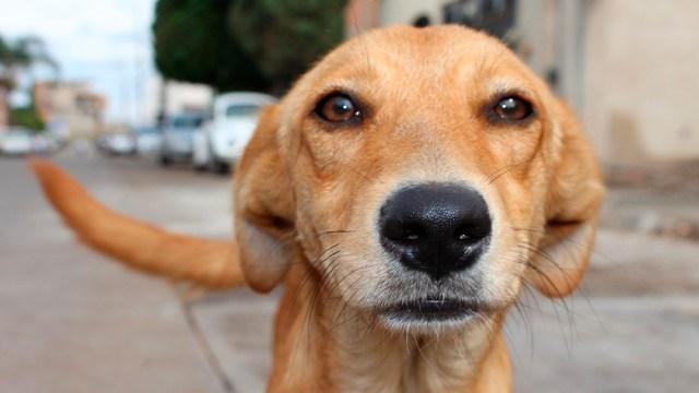 Encuentran cuerpos de perros en terreno de Guanajuato